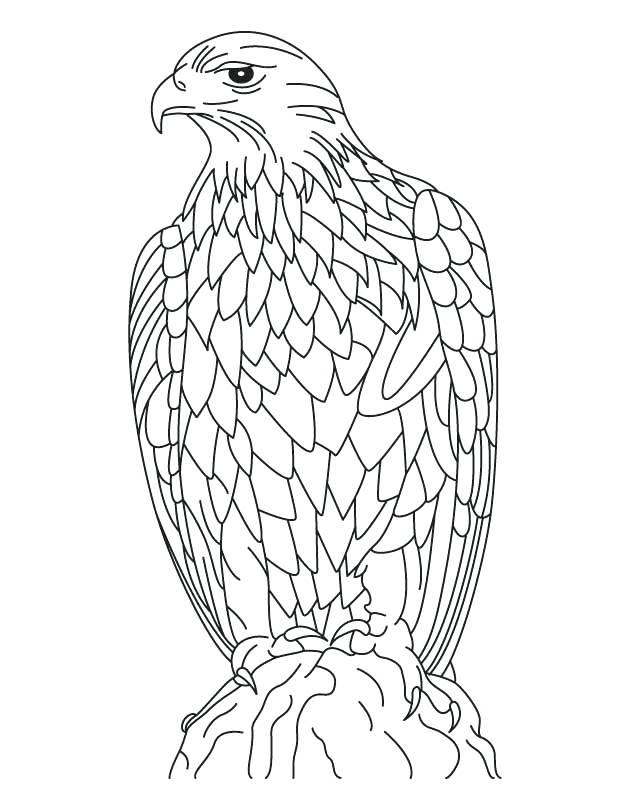 630x810 Bald Eagle Coloring Page Plus Harpy Eagle Coloring Page Bald Eagle
