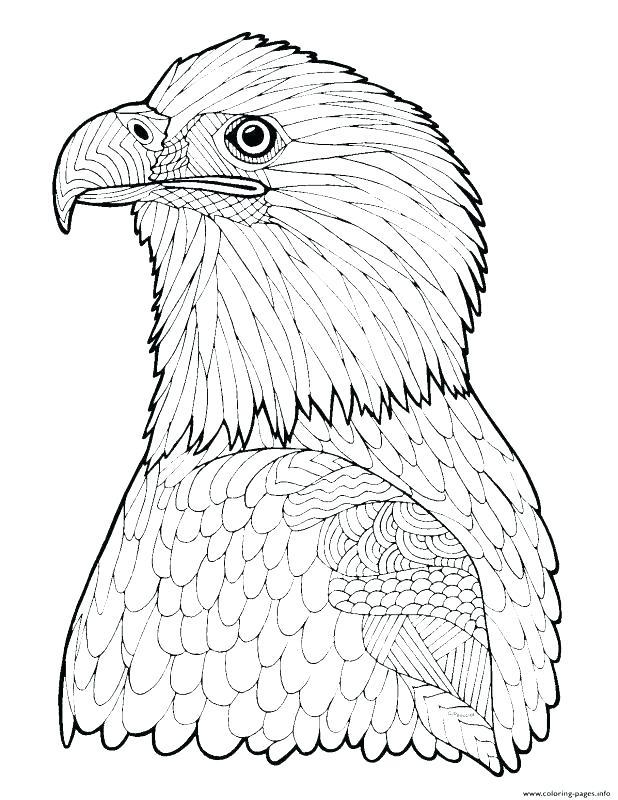 618x800 Bald Eagle Coloring Pages Harpy Eagle Coloring Page Bald Eagle