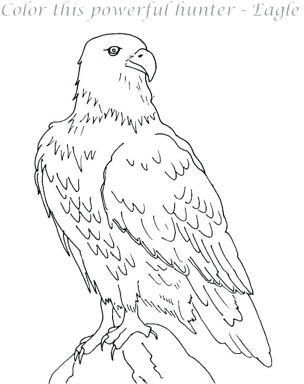618x780 Coloring Pages Of Eagles Eagle Coloring Pages Harpy Eagle Coloring