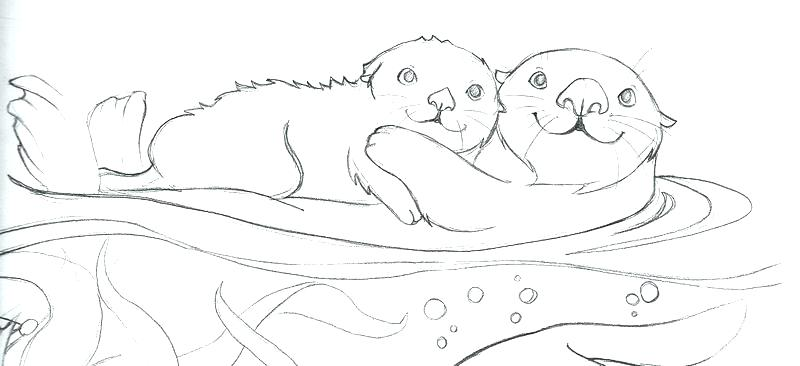 800x366 Otter Coloring Pages Sea Otter Coloring Page Harry Potter Coloring