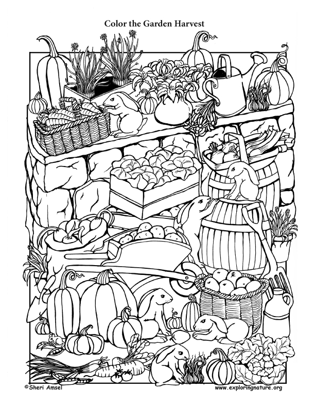 612x792 Garden Harvest Coloring Page