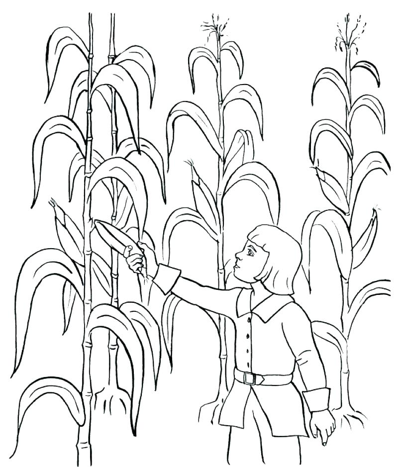 800x939 Fall Coloring Pages Pdf With Autumn Coloring Page Harvest Coloring