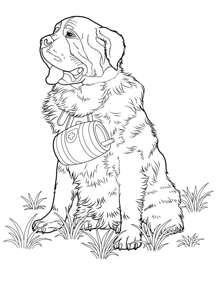 Havanese Coloring Pages
