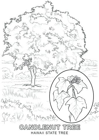 340x480 Hawaii Coloring Pages Coloring Pages Concept Girl And Umbrella