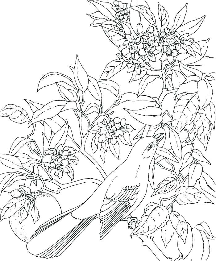700x846 Hawaii Coloring Page Coloring Pages Awesome Coloring Pages