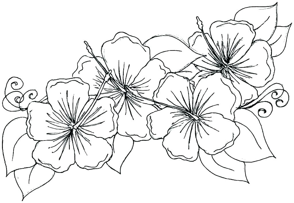 1024x708 Hawaii Coloring Pages Coloring Page Coloring Pages Hawaii Coloring