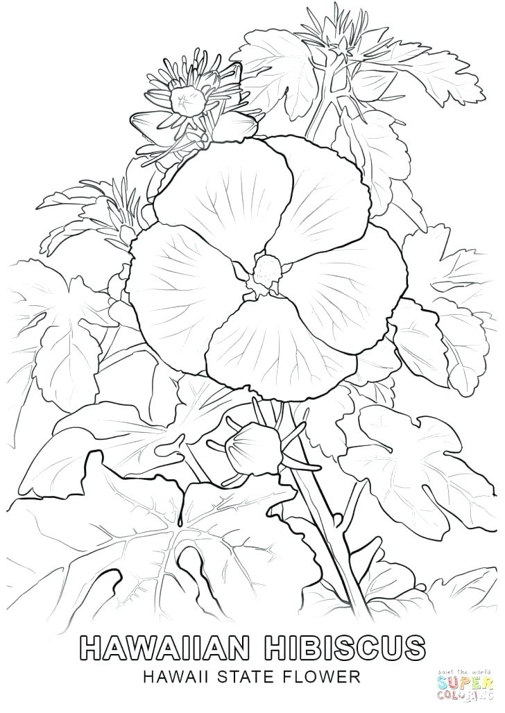 728x1028 Flower Coloring Pages Coloring Pages Tropical Flower Flower
