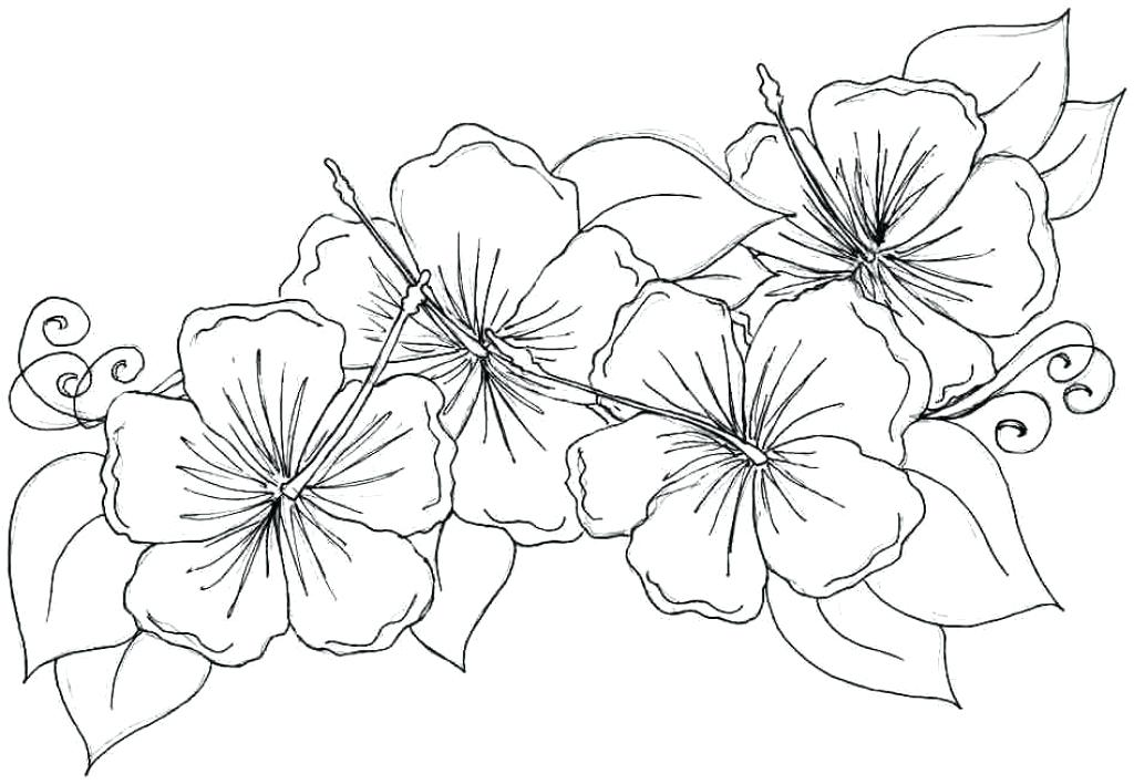 1024x708 Free Coloring Pages Of Hawaiian Flowers