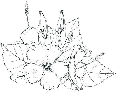 400x312 Hawaiian Flower Coloring Page Flower Coloring Pages Best Of Flower