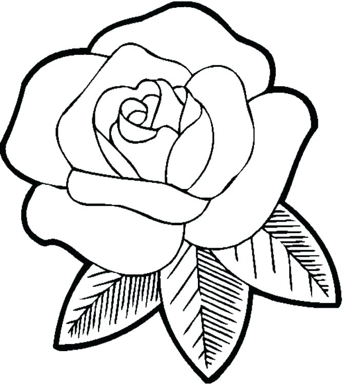671x750 Hawaiian Flower Coloring Pages Flowers Coloring Pages Flower