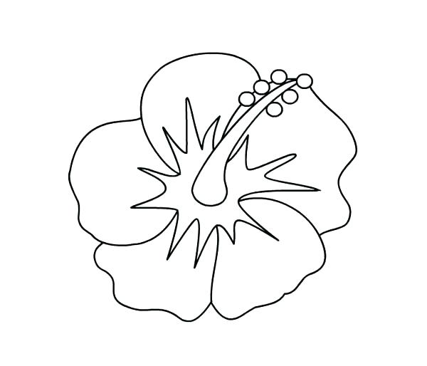 600x514 Hawaiian Flower Coloring Pages Hibiscus Picture Page State Sheets