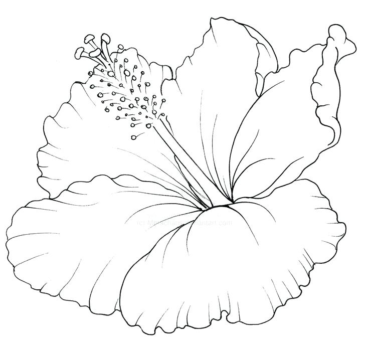 736x676 Hawaiian Flower Coloring Pages Tattoo Hawaii Page Coloring