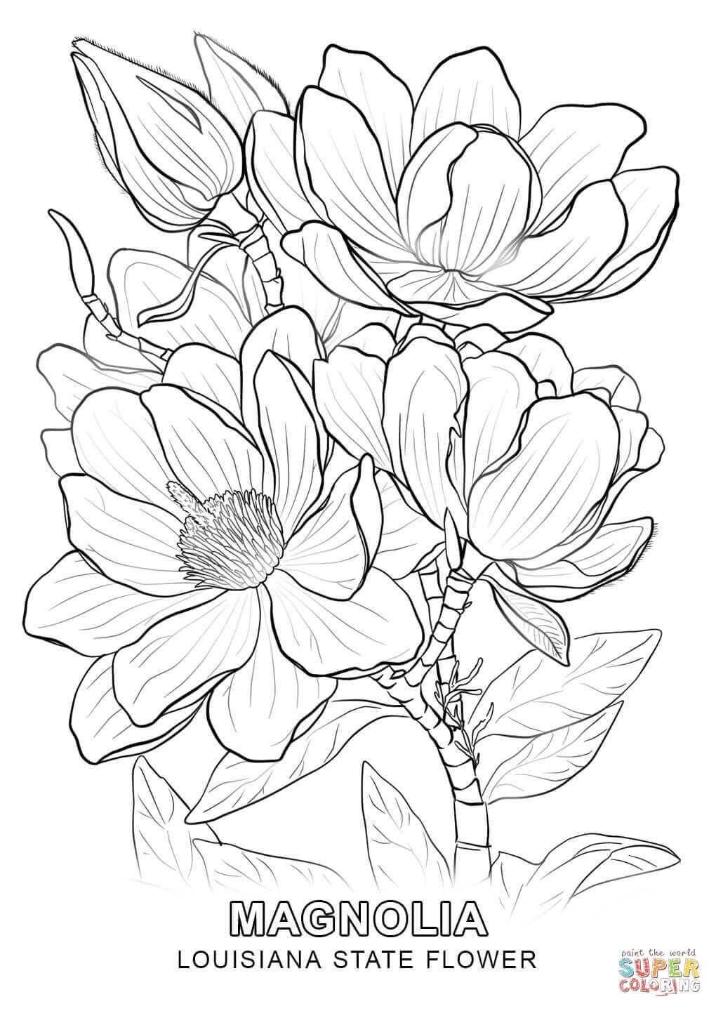 1020x1440 Louisiana State Flower Coloring Page New Coloring Sheets