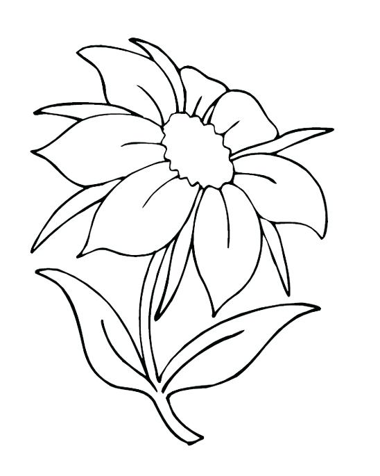 548x685 Pretty Flower Coloring Pages Free Printable Flowers Colouring