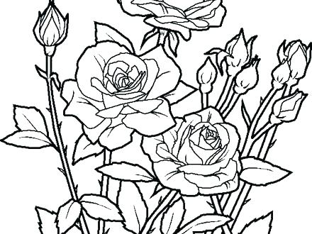 440x330 Flowers Coloring Pages Print