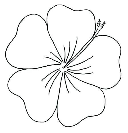 448x466 Hawaiian Flowers Coloring Pages Free