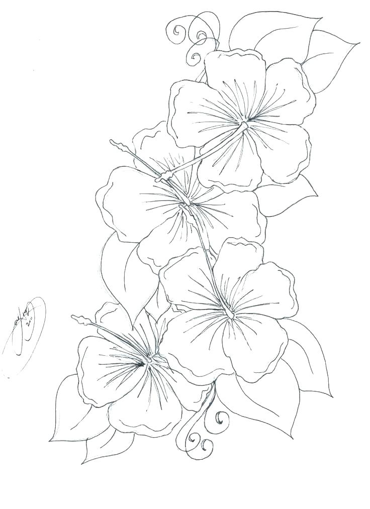 736x1013 Hibiscus Flower Coloring Pages