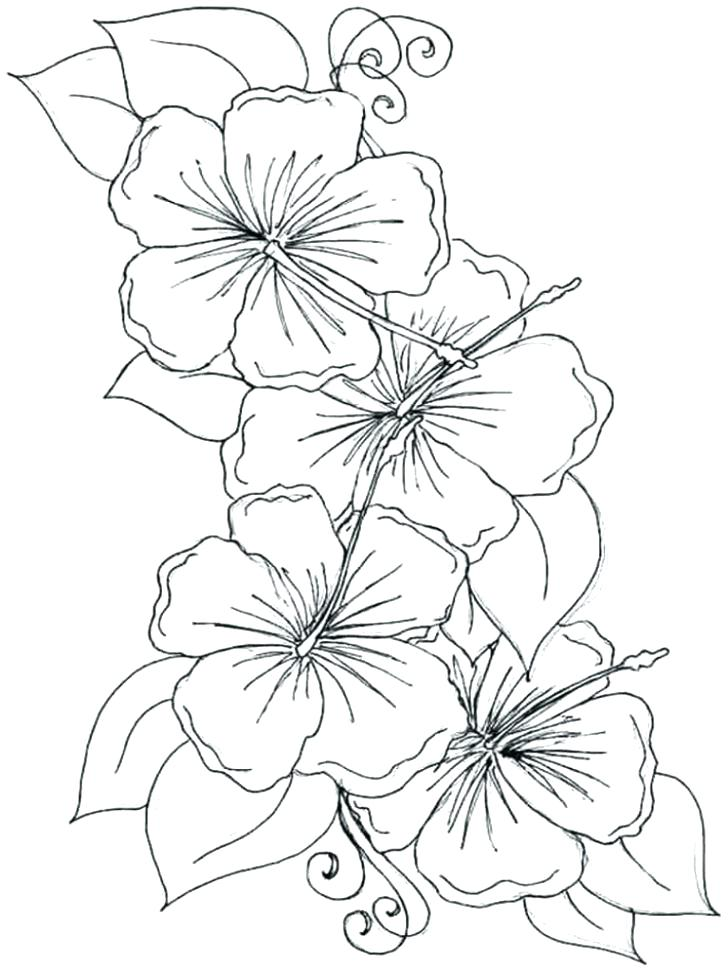 728x971 Drawing At Free For Personal Use Hawaiian Flower Coloring Pages
