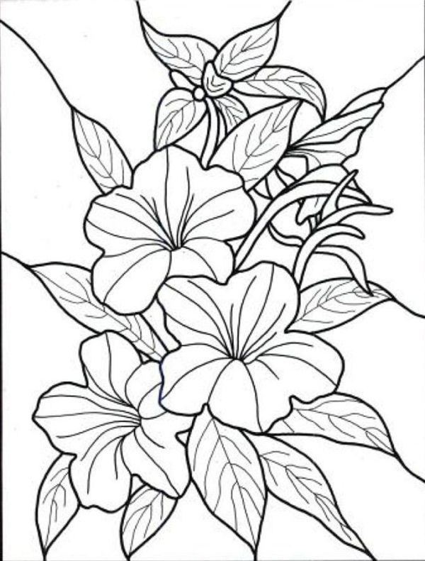 600x791 Exotic Flower Coloring Pages Hawaiian Flower Colouring Pages