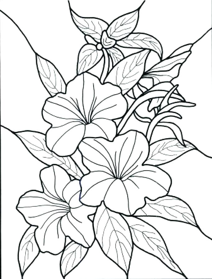 682x900 Flower Color Pages Cartoon Flower Coloring Page Coloring Pages