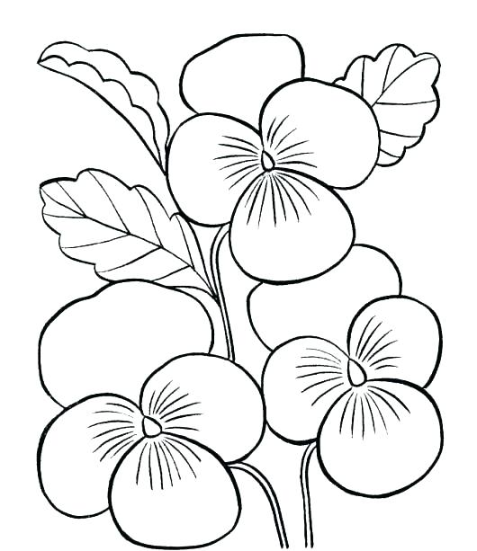 530x613 Free Printable Flowers Coloring Pages Simple Flower Coloring Pages