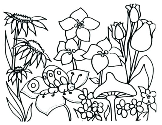 550x425 Free Printable Hawaiian Flowers Flowers Coloring Page Flower