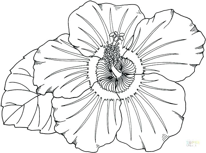 720x535 Hawaii Coloring Pages Coloring Pages With Coloring Pages Coloring