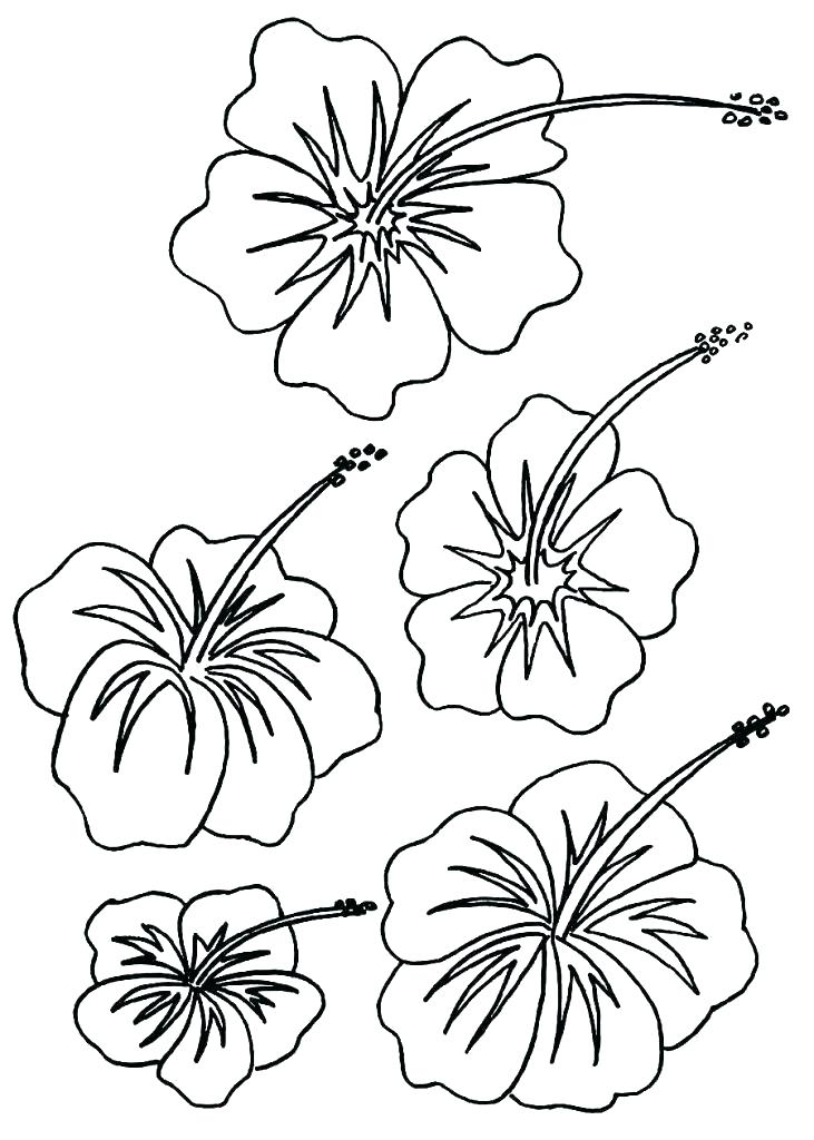 731x1024 Hawaiian Flower Coloring Page Flowers To Color Coloring Pages
