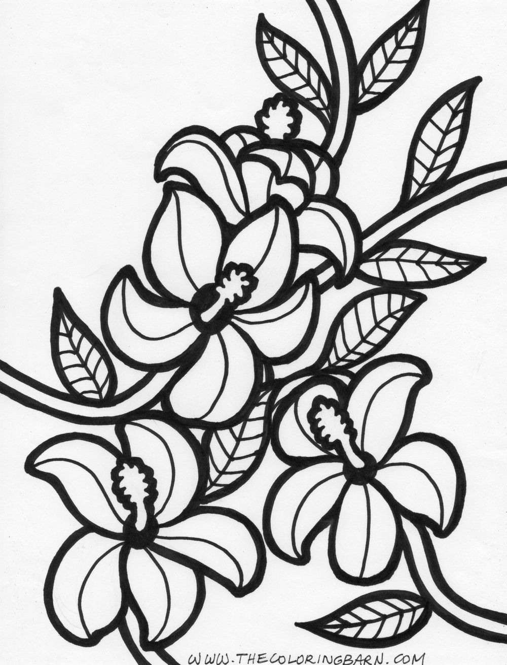 1000x1310 Hawaiian Flower Coloring Pages