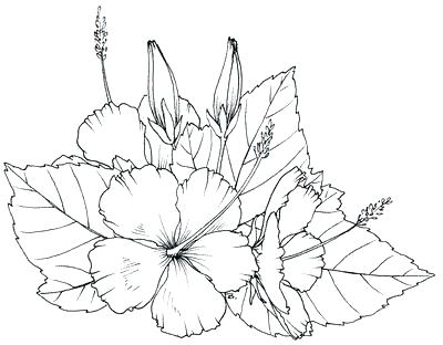 400x312 Hawaiian Flower Coloring Pages Best Of Flower Coloring Pages