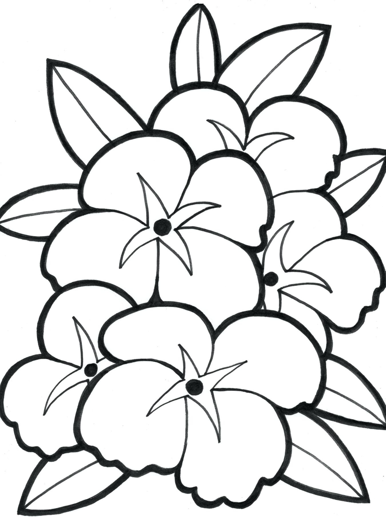 1350x1808 Hawaiian Flowers Coloring Pages Incredible Flower Mosm