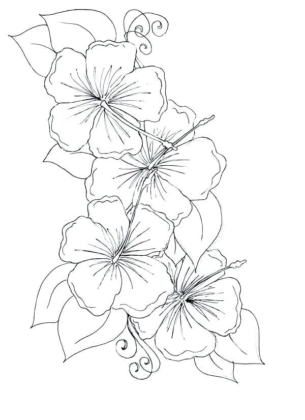 600x826 Hawaiian Coloring Pages Dreamtemplates Club