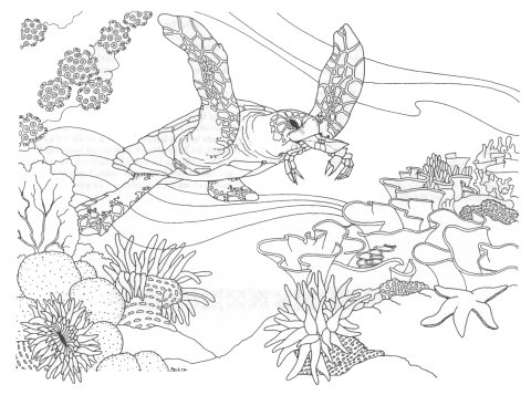 480x357 Realistic Sea Turtle Coloring Pages Color Bros