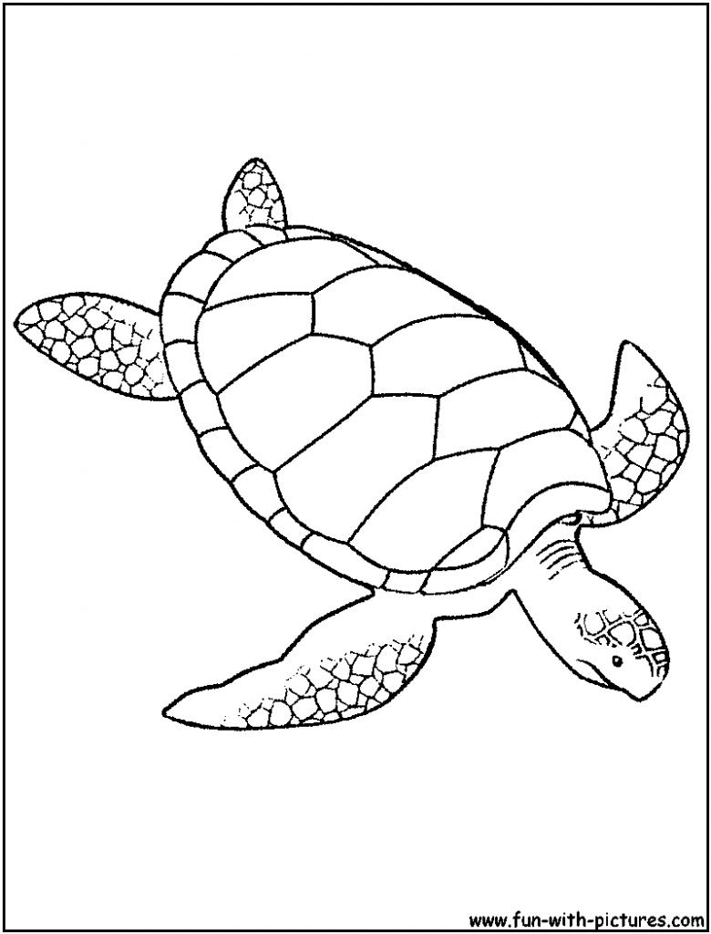 780x1024 Sea Turtle Coloring Page Gites Loire Valley