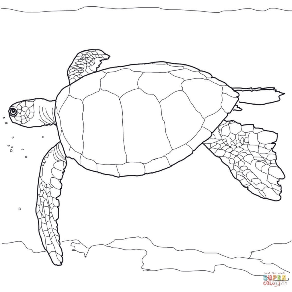 1024x1024 The Most Amazing Sea Turtles Pictures To Print
