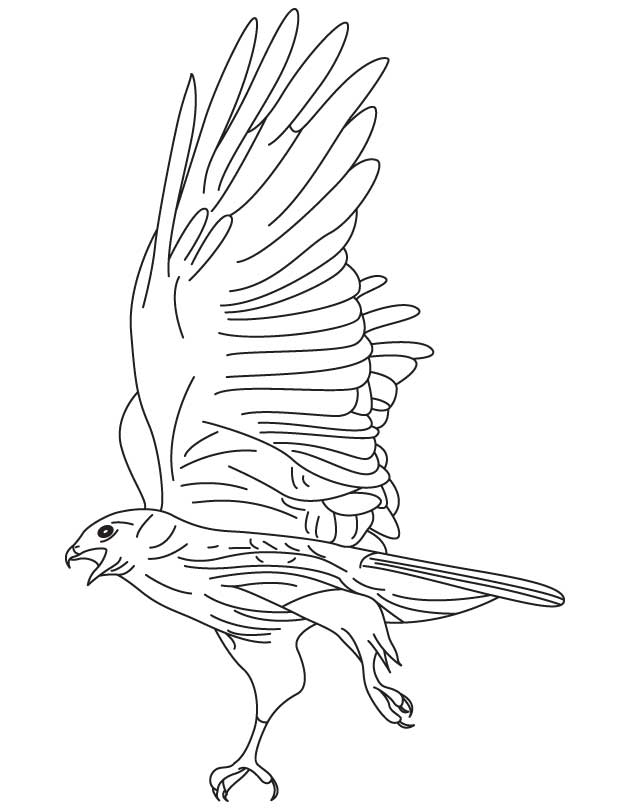630x810 Red Tailed Hawk Coloring Page Download Free Red Tailed Hawk