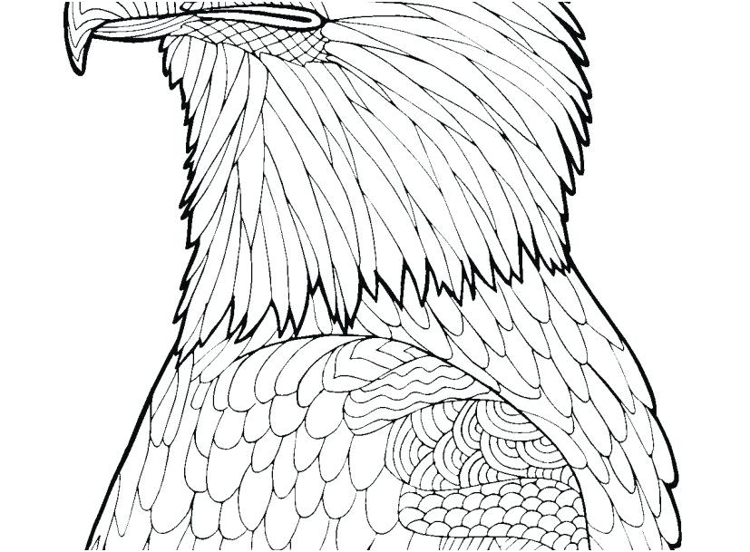 827x609 Bald Eagle Coloring Pages Bald Eagle Coloring Page Portraits Bald