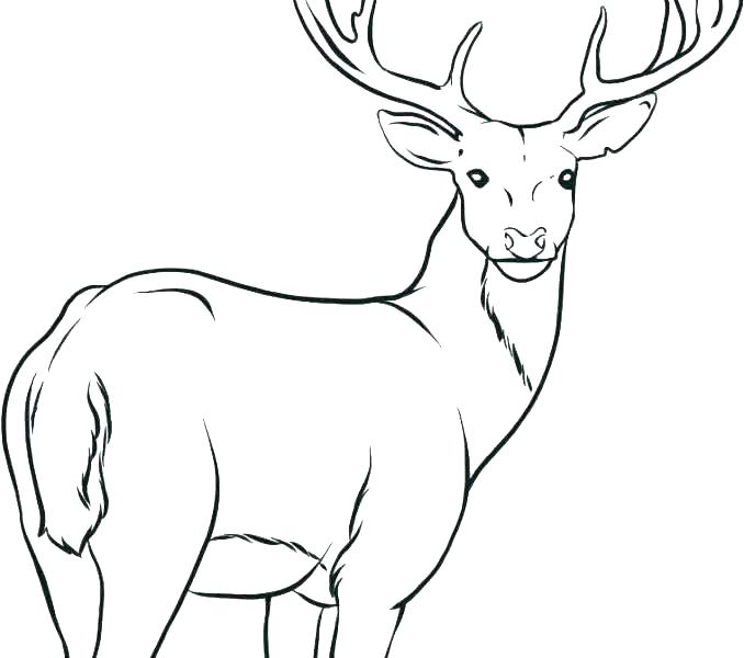 678x600 Deer Head Coloring Pages Devon Creamteas