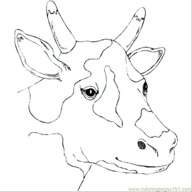 650x650 Cow Face Coloring Page Spotty Cow Head Coloring Page Free Pages
