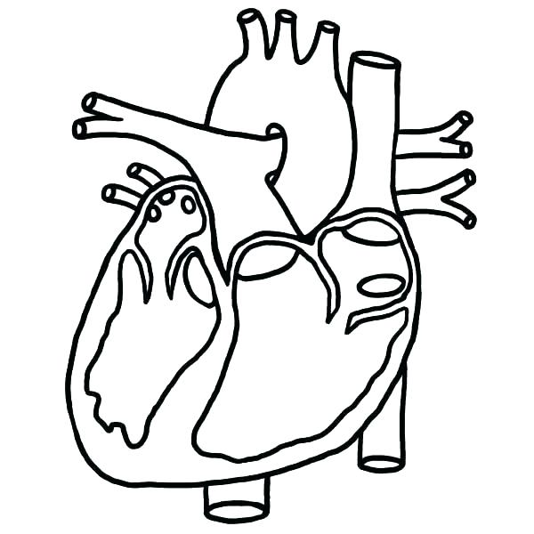 600x600 Anatomy Coloring Pages Heart Anatomy Coloring Page Anatomy