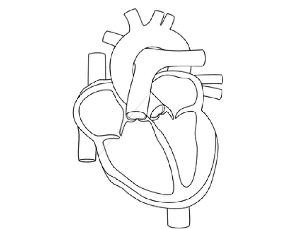 1024x768 Human Heart Coloring Page Free Printable Pages Throughout