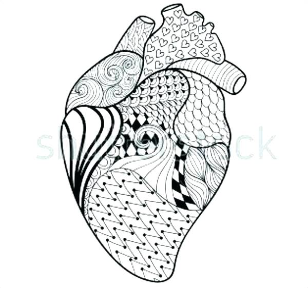 600x562 Human Heart Colouring Pages Printable Coloring Heart Anatomy