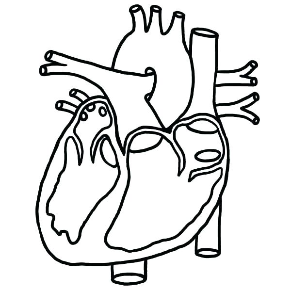 600x600 Heart Anatomy Coloring Pages Heart Anatomy Coloring Pages Anatomy