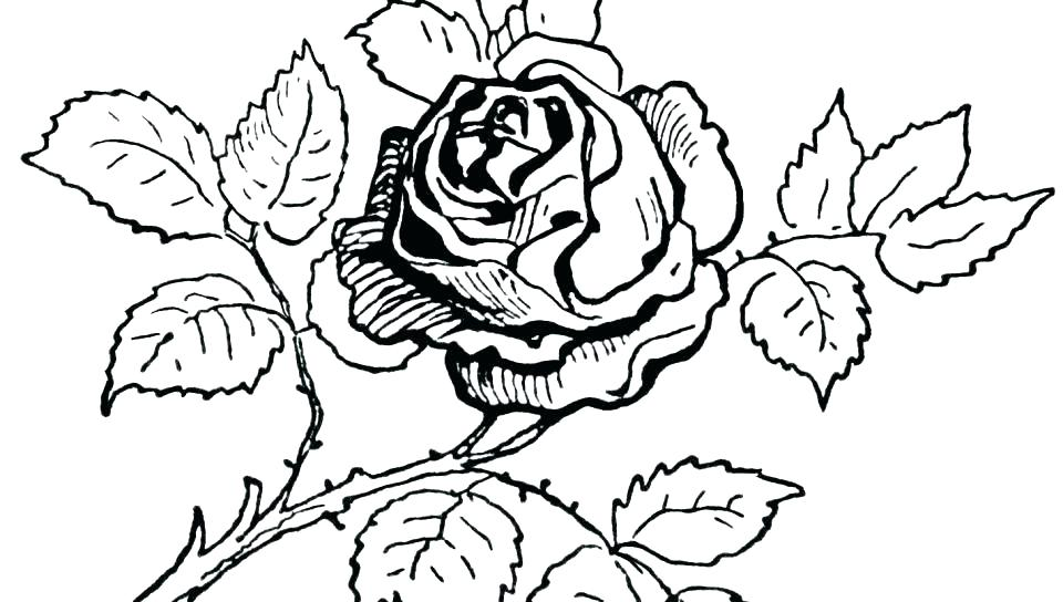 960x544 Heart And Rose Coloring Pages Best Free Coloring Pages Of Roses