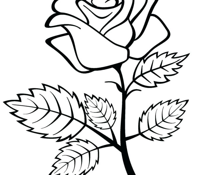 678x600 Heart And Roses Coloring Pages Hearts Roses Hearts And Roses Tied
