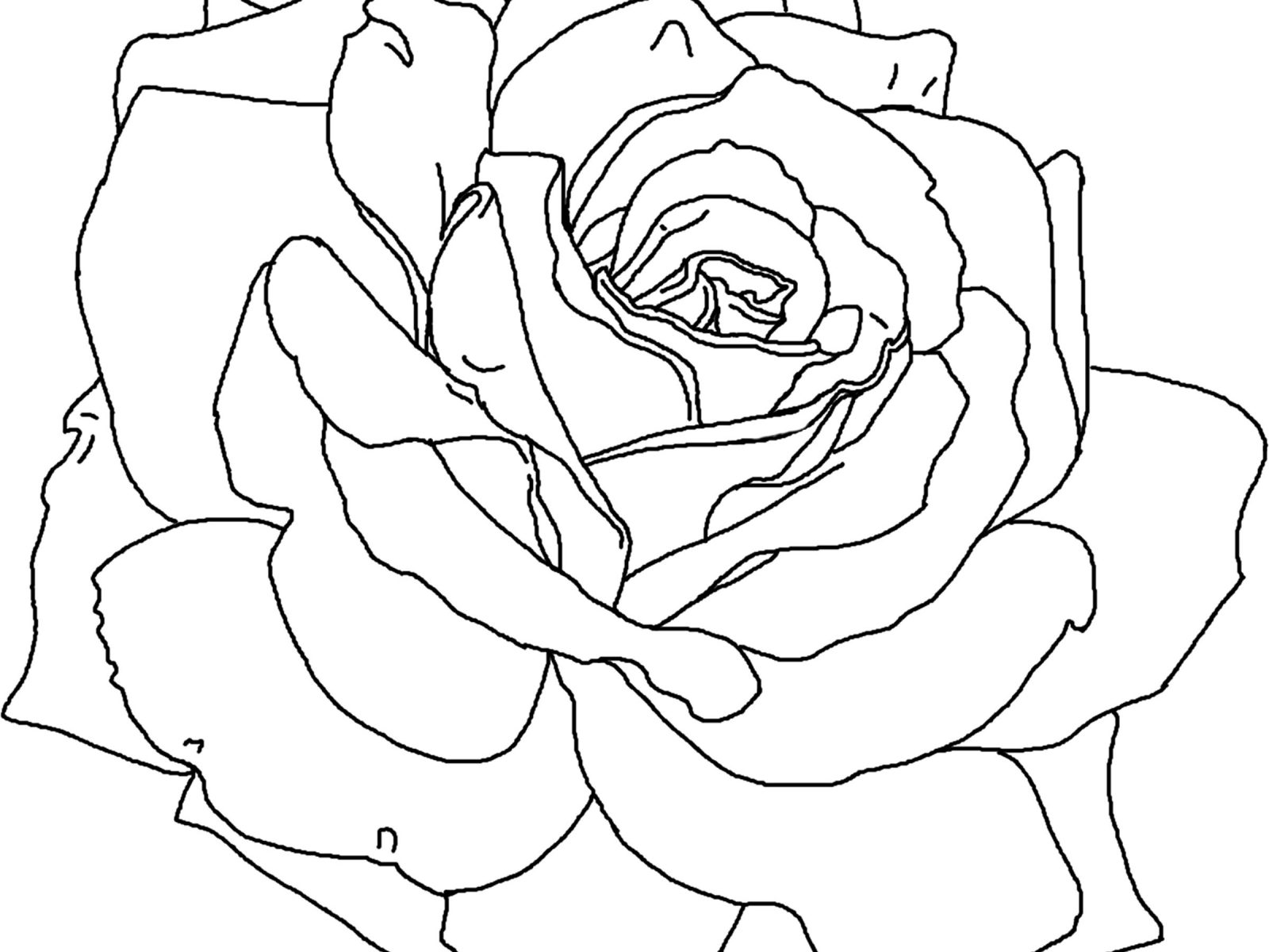 1600x1200 Roses Coloring Pages Free Printable Flowers Pretty Beautiful Red