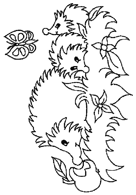 553x794 Kids N Coloring Pages Of Hedgehogs