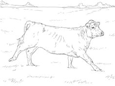 236x177 Cattle Breed Coloring Pages