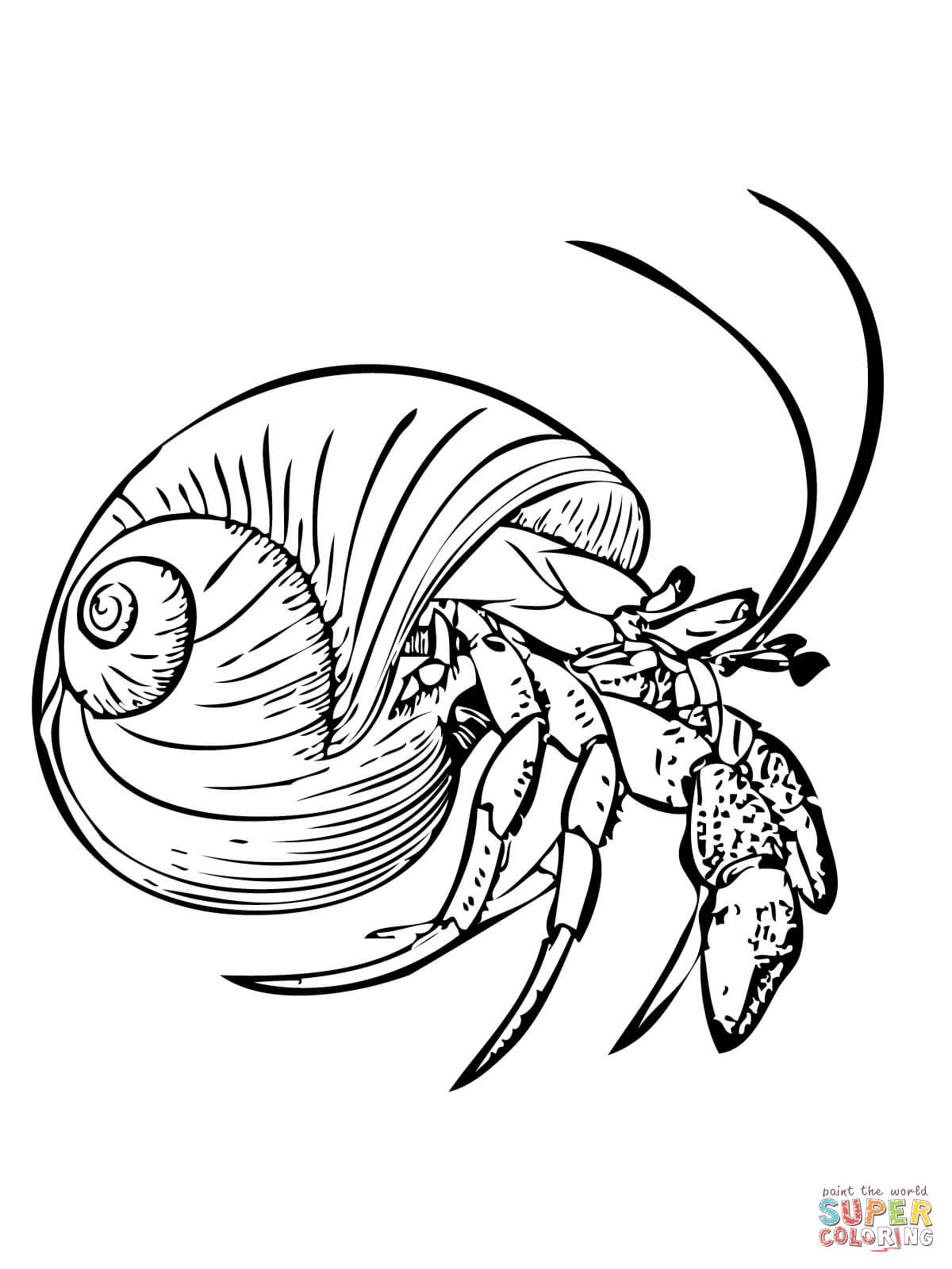 1200x1600 Good Common Hermit Crab Or Soldier Crab Coloring Page