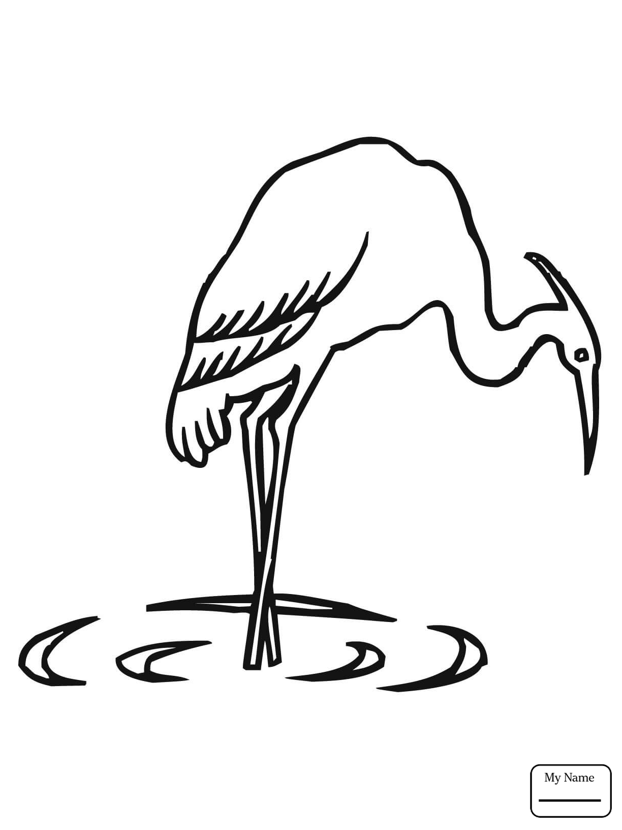 1224x1632 Selected Blue Heron Coloring Page Great Drawin